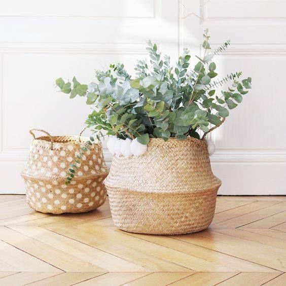 plante-verte-pot-osier