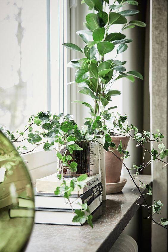 plante-vertes-rebord-fenetre